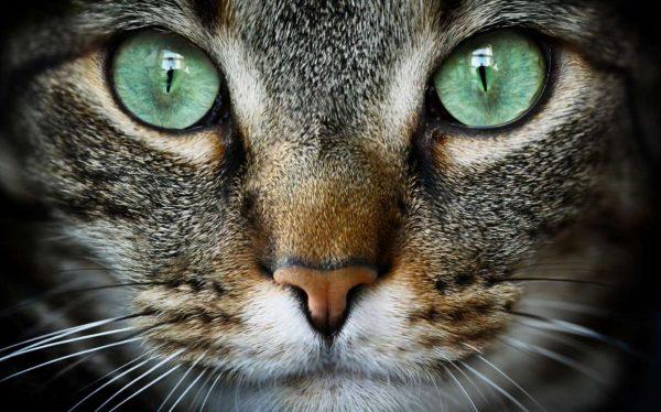 Cat Expressions: Baixe o tema voltado aos amantes de gatos!
