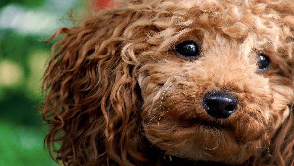 Dica: Personalize seu PC com tema o tema Dogs & Cats!