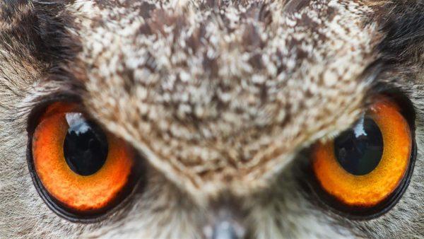 Dica: Personalize seu PC com tema o tema Wild Eyes